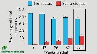 Jak změnit poměr Firmicutes a Bacteroidetes