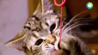 Без кота в Петербурге жизнь не та   МИР24