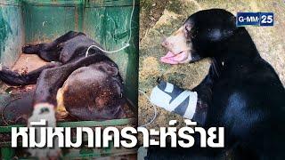 พรานใจยักษ์ วางกับดักรัดอุ้งตีนหมีหมาสุดทรมาน   เจาะข่าวค่ำ   GMM25