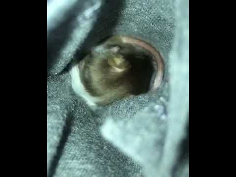 Mouse in my pocket...