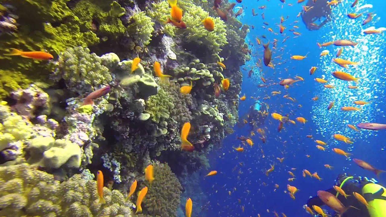 croisiere-plongee-en-mer-rouge