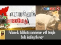 Famous Palamedu Jallikattu Commences With Temple Bulls Kangayam video