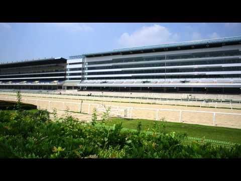 서울경마공원 (Seoul Horse Racing Park)