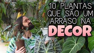 10 Plantas de Sombra para Decorar Ambientes Internos