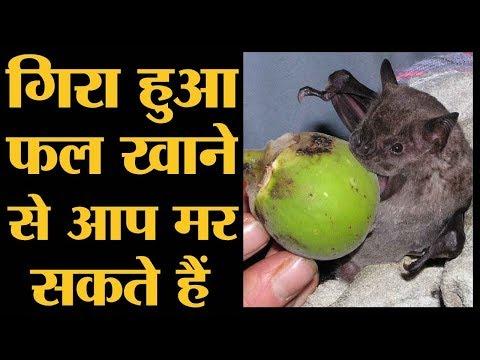 क्या है Nipah Virus, जिससे 10 लोग मर गए | Kerala NiV