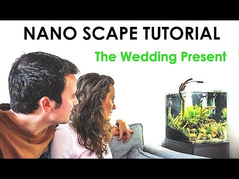 HOW TO SCAPE A NANO TANK (And Give The Best Wedding Present!!)