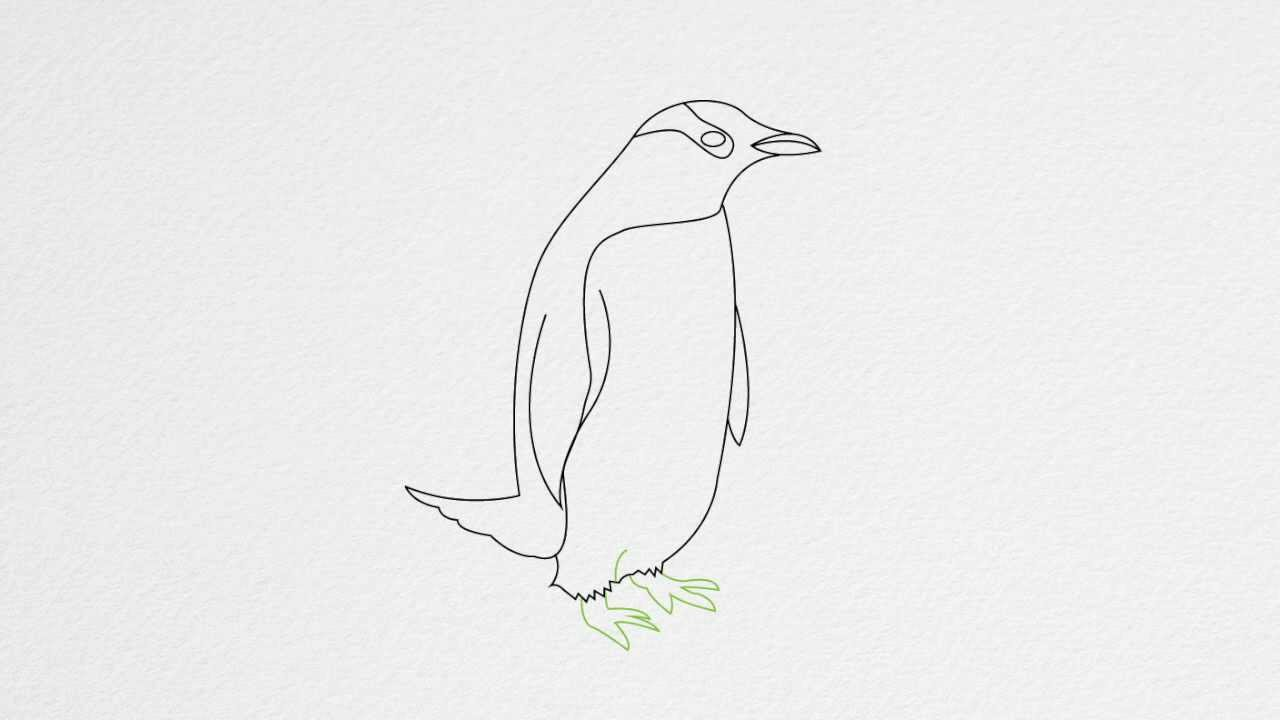 how to draw a penguin step by step youtube