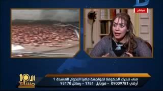 بالفيديو- طبيبة بيطرية تكشف سبب انتشار لحوم الحمير في السوق