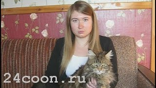 Мейн кун. Лоток и наполнитель для кошки