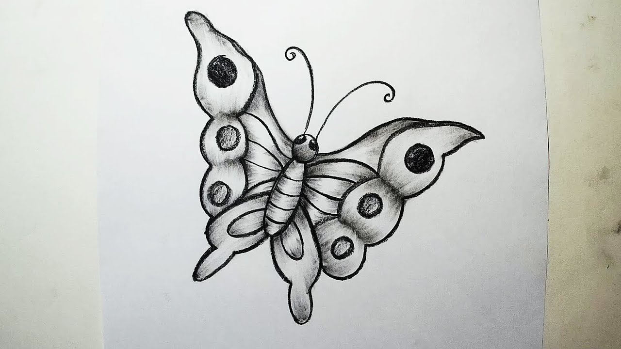 How to draw a butterfly charcoal drawing and shading