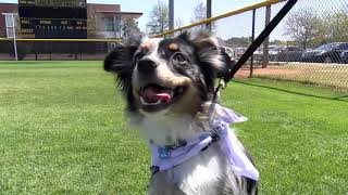 UNCP Softball Bark in the Park!