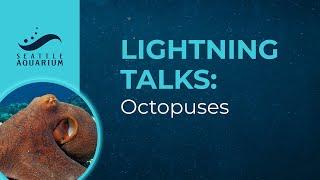 Lightning Talks: Octopuses