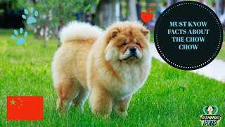 Getting To Know Your Dog's Breed: Chow Chow Edition