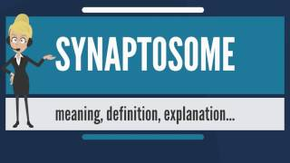 What is SYNAPTOSOME? What does SYNAPTOSOME mean? SYNAPTOSOME meaning, definition & explanation