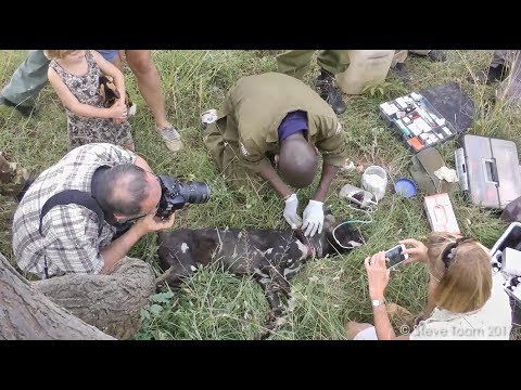 Wild dog gets help from a vet