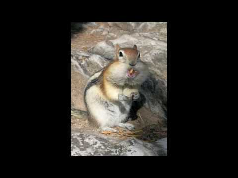 The Big Fat Ugly Chipmunk Youtube