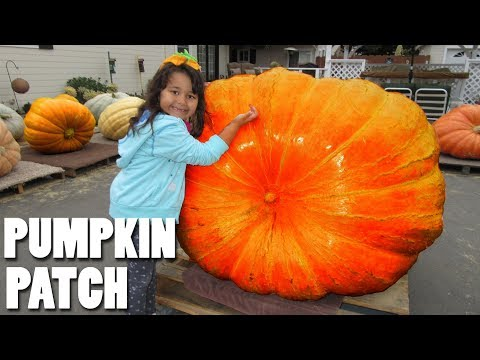 Halloween Pumpkin Patch at the Farm Huge Pumpkin Corn Maze Fun Video for Kids