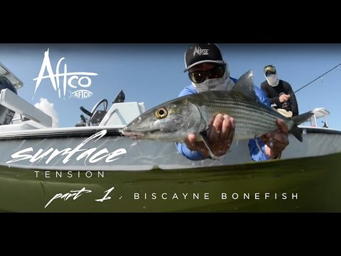 SURFACE TENSION: Biscayne Bonefish