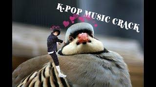 K-POP Music Crack 2 (Rus)