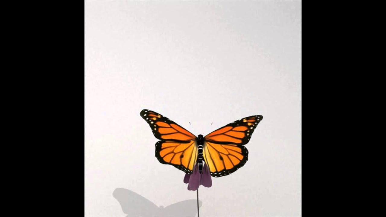 Monarch Butterfly animation (Flying slow motion)