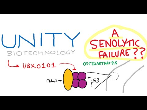 Unity Biotechnology & UBX0101 - A Senolytic Failure?