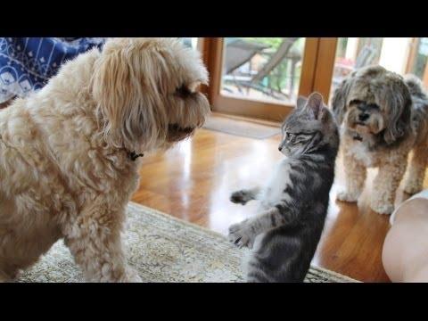 Dejting För Hundar Youtube