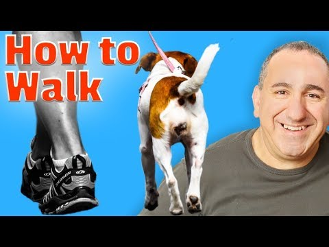 How To Make My Dog Walk Without Pulling
