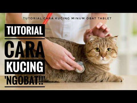 Download 67+  Gambar Lucu Kucing Minum Obat Paling Keren