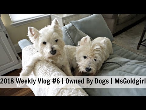 2018 Weekly Vlog #6 | Owned By Dogs | MsGoldgirl