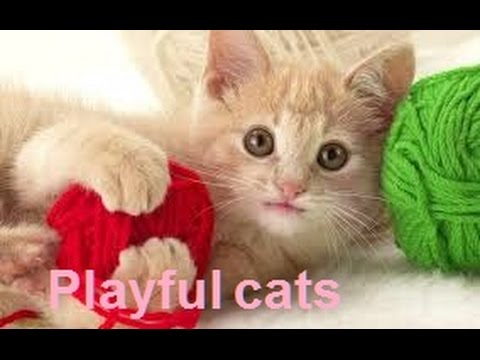 Playful cats 2016