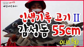 """Live)""""내 인생 기록고기 II, 감성돔 5…"""