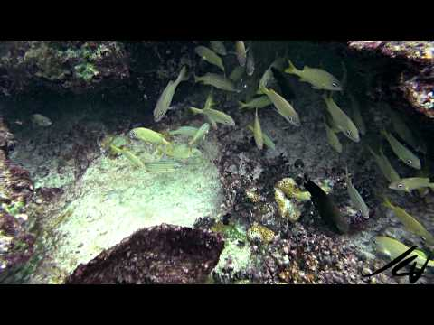 So beautiful, so threatened - Caribbean reefs and coral - YouTube