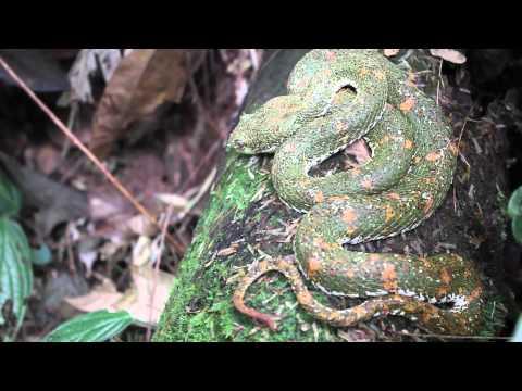 La Tirimbina Rainforest Lode - Sarapiqui Costa Rica