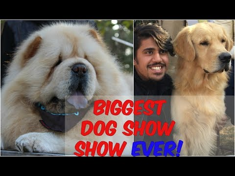 Greatest DOG SHOW EVER! | Delhi INDIA | Wildly Indian