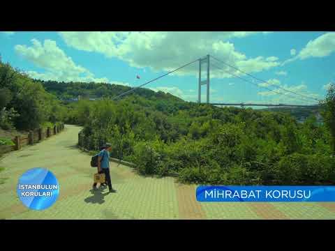 İstanbul'un Koruları | Mihrabat Korusu