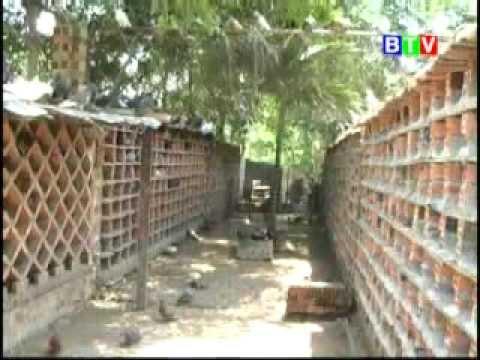 Chuồng nuôi bồ câu quần thể ĐT hỗ trợ 094 2368 133