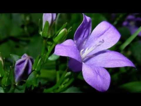 fleurs d'auvergne. musique de karl jenkins (« palladio ») - youtube
