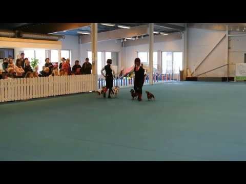 Gammeldans med svans i Hundhallen i Haninge