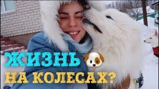 """Download Псяшкин дом! Жизнь наших собак """"на колесах"""". Mp3 and Videos"""