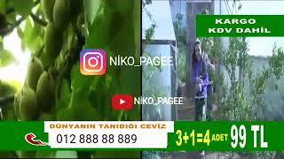 Mirt Prikol Gulmeli Video Qoz na Alma (kanala abune olun)