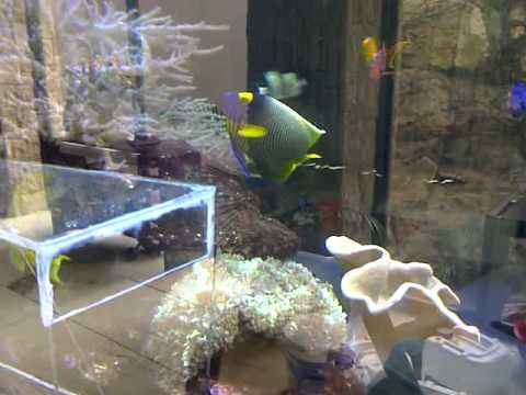 Fish trap for big aquariums youtube for Aquarium fish trap