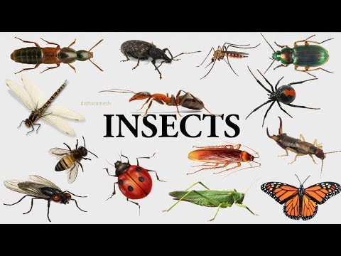 A-Z INSECTS NAMES