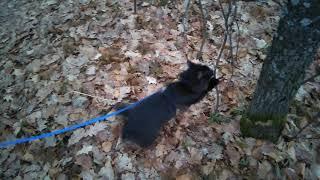 Поводок-рулетка для кошачьей прогулки