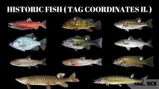 Fishing Planet - New Missions, Historic Fish Event ( FISH TAG COORDINATES II.)