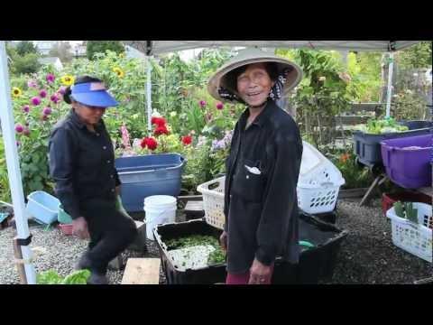 Growing Food  - Growing Community