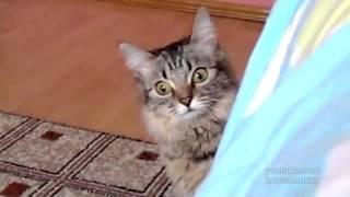Фильм ужасов про кошек 4