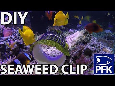 DIY SEAWEED CLIP