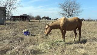 Feeding Horses A Flake or Biscuit Of Hay Can Unhealthy & Contribute To Colic