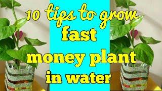 How to grow money plant in water,बोतल में मनीपलांट की देखभाल कैसे करें,anvesha,s creativity