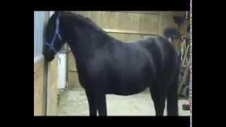 самая сообразительная лошадка в мире